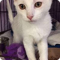 Adopt A Pet :: Spot - Satellite Beach, FL