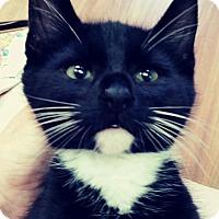 Adopt A Pet :: Kimolas - Trevose, PA