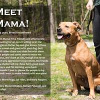 Adopt A Pet :: Mama - Farmington, ME
