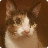 Adopt A Pet :: May - Houston, TX