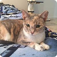 Adopt A Pet :: Amaretto and Autumn - St. Louis, MO