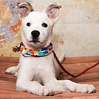 Adopt A Pet :: 745 - Aurora, CO