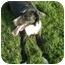 Photo 1 - Border Collie Mix Dog for adoption in Patterson, California - GRETCHEN