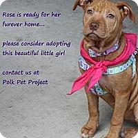 Adopt A Pet :: Rose - Winter Haven, FL