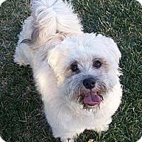 Adopt A Pet :: BENJAMIN - Mission Viejo, CA
