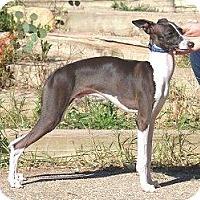 Adopt A Pet :: Jerry - Croton, NY