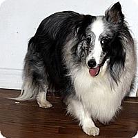 Adopt A Pet :: Fiona - La Habra, CA