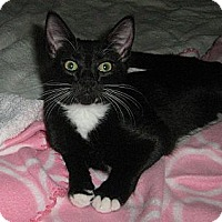 Adopt A Pet :: Bailey - Vero Beach, FL