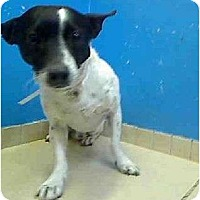 Adopt A Pet :: SANCHO - Dennis, MA