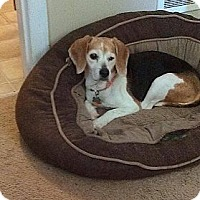 Adopt A Pet :: Cookie - Wilmington, DE