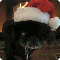 Adopt A Pet :: Lester - Richmond, VA