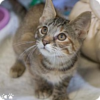 Adopt A Pet :: Bobbi - Merrifield, VA