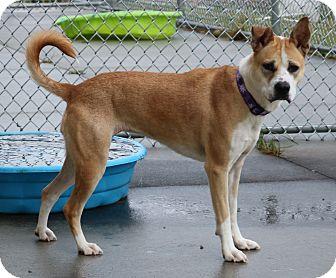 Husky Mix Dog for adoption in Council Bluffs, Iowa - Emerald