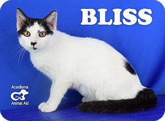 Domestic Shorthair Kitten for adoption in Carencro, Louisiana - Bliss