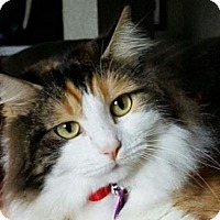 Adopt A Pet :: Addlyn - Davis, CA