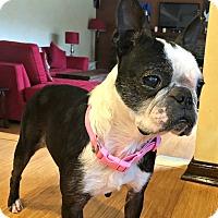 Adopt A Pet :: Nahi - Greensboro, NC