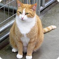 Adopt A Pet :: Marmalade - Elkins, WV