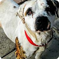 Adopt A Pet :: Bobbie Leah - San diego, CA