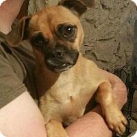 Adopt A Pet :: Bailey! *Adoption Pending!* - New York, NY