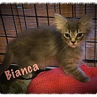 Adopt A Pet :: Bianca - Cleveland, TN