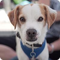 Adopt A Pet :: Frazier - Santa Monica, CA