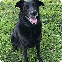 Adopt A Pet :: BINDI LOVES KITTIES - Auburn, WA