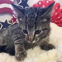 Adopt A Pet :: Albert - Brownwood, TX