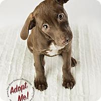 Adopt A Pet :: Emma Lou - Gillsville, GA