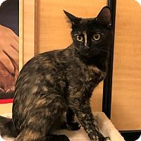 Adopt A Pet :: Galena - Barrington Hills, IL