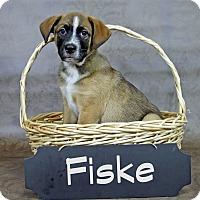 Adopt A Pet :: Fiske - Joliet, IL