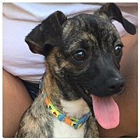 Adopt A Pet :: Ava - Holly Springs, NC