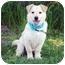 Photo 1 - Labrador Retriever/Corgi Mix Dog for adoption in Portsmouth, Rhode Island - Gunnar