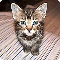 Adopt A Pet :: Jenna - Xenia, OH