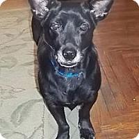 Adopt A Pet :: Nomie reduced to 300$ - Staunton, VA