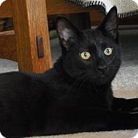 Adopt A Pet :: Charley - Port Republic, MD