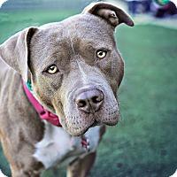 Adopt A Pet :: Skittles - San Diego, CA