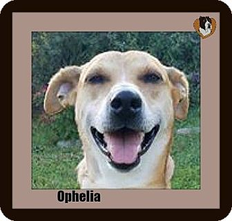 Terrier (Unknown Type, Medium) Mix Dog for adoption in Memphis, Tennessee - Ophelia
