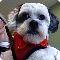 Adopt A Pet :: Toots ~ Adoption Pending - Youngstown, OH