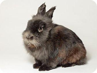 Dwarf for adoption in Kingston, Ontario - Larry
