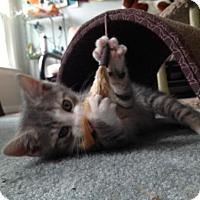 Adopt A Pet :: Thunder (Boomer's brother) - Trenton, NJ