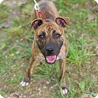 Adopt A Pet :: Brielle - Mt. Vernon, IN