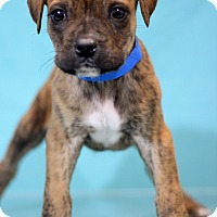 Adopt A Pet :: Dover - Waldorf, MD