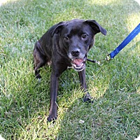 Adopt A Pet :: Sheba - Manhattan, KS