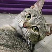 Adopt A Pet :: Ginger - Herndon, VA