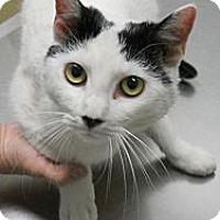 Adopt A Pet :: St. Nick - Fairfield, CT