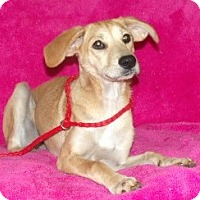 Adopt A Pet :: Riley - Phillips, WI