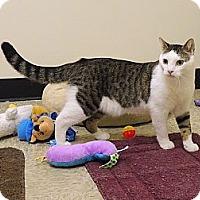Adopt A Pet :: Leo - Pineville, NC