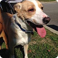 Adopt A Pet :: Sampson - East Rockaway, NY