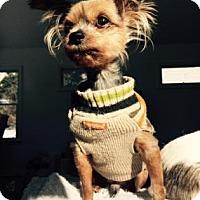 Adopt A Pet :: Einstein - Rockaway, NJ
