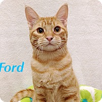 Adopt A Pet :: Ford - Foothill Ranch, CA